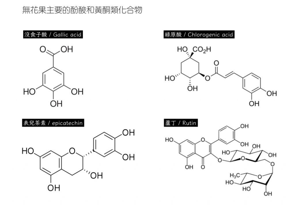 無花果-酚酸-黃酮類化合物-植物化