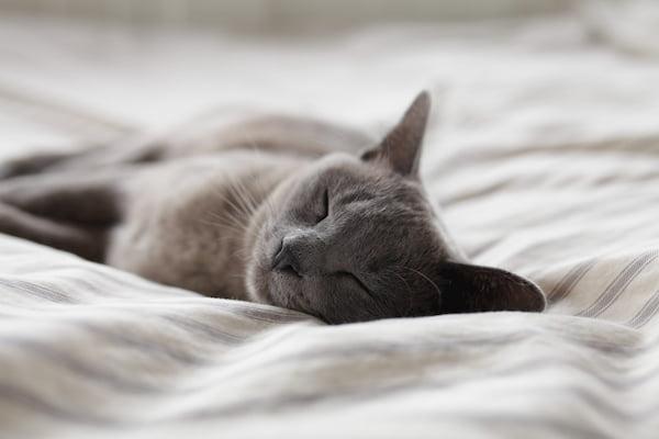 吃魚-改善睡眠-貓