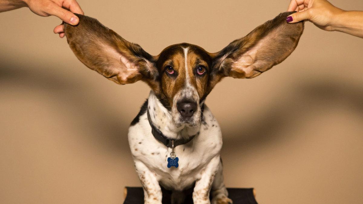 助聽器-聽力缺損-失智症-憂鬱-跌倒