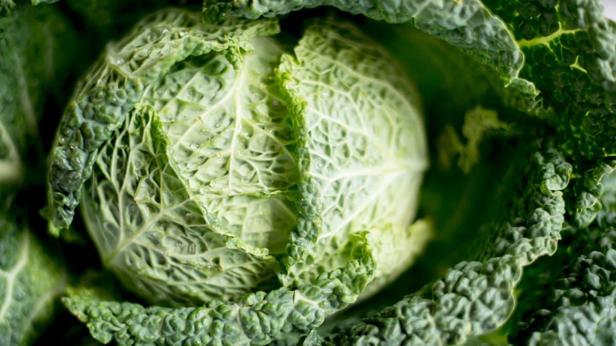 蕈菇-千層白菜-結球白菜