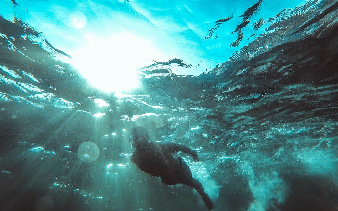 鱸魚不只是開刀魚    喝鱸魚精可能有助精抗疲勞?