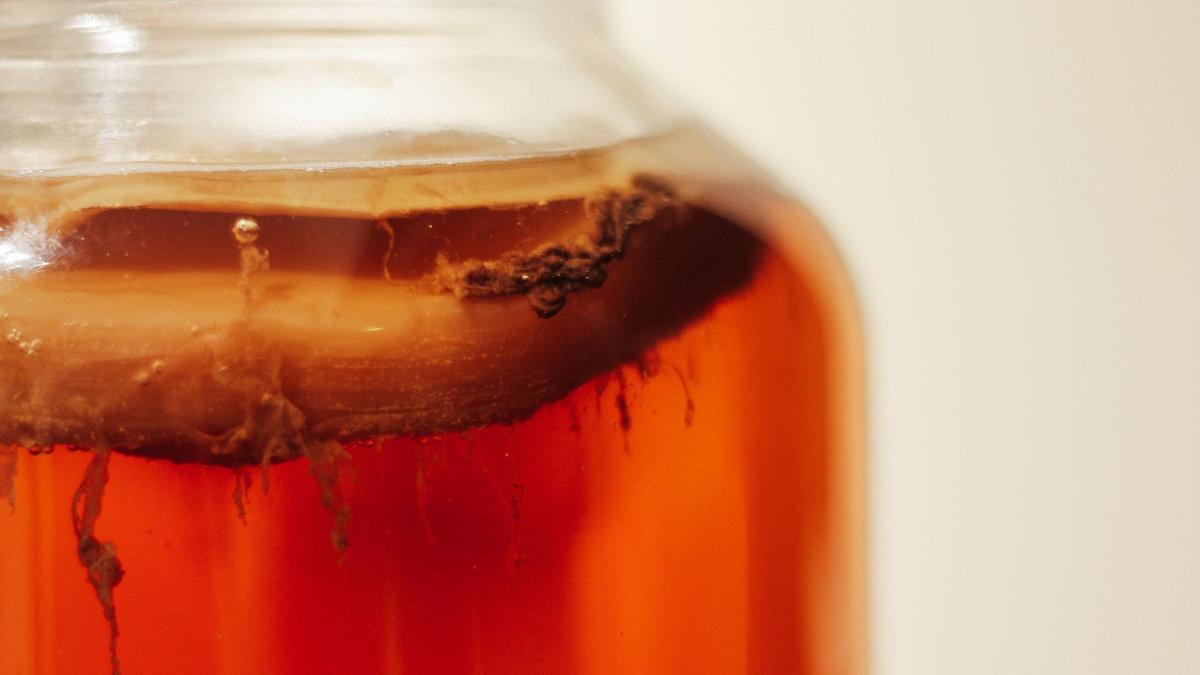 kombucha-康普茶-紅茶-發酵