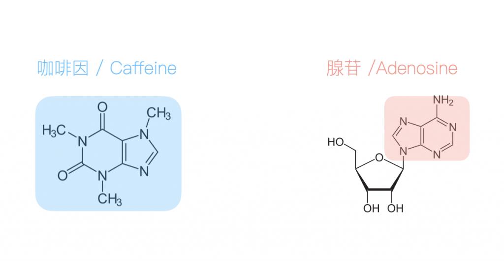 咖啡因-腺苷-分子