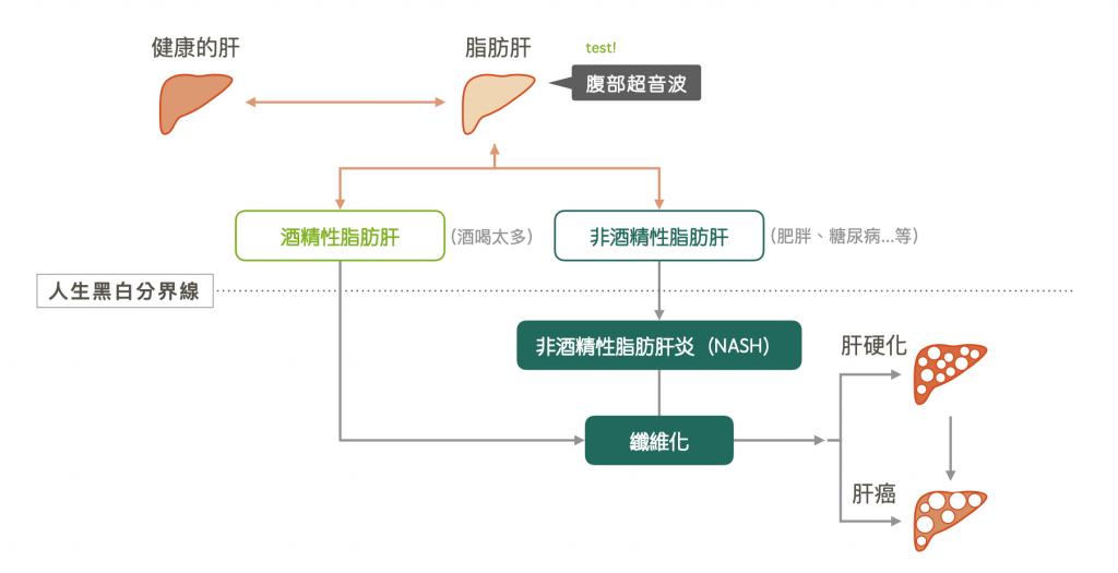 肝硬化-生育三烯酚-維生素E-護肝-保肝