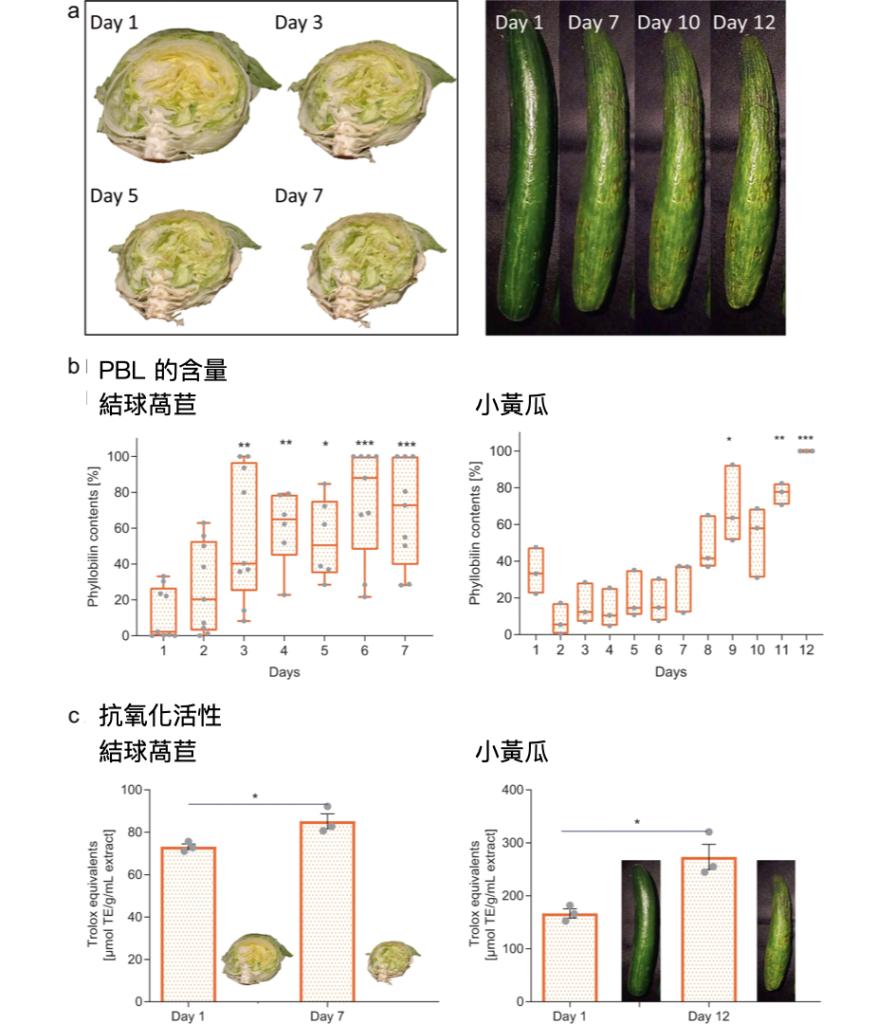 食物浪費-萵苣-小黃瓜放置試驗