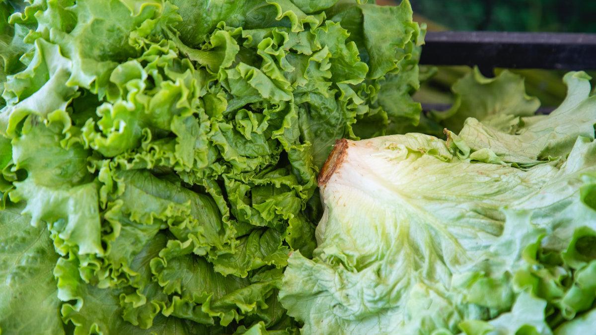 食物浪費-葉綠素褪色